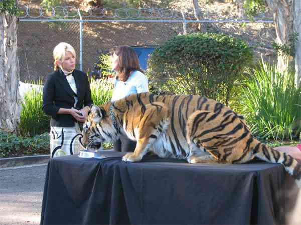 Sea World/Busch Gardens Animal Ambassador Julie Scardina