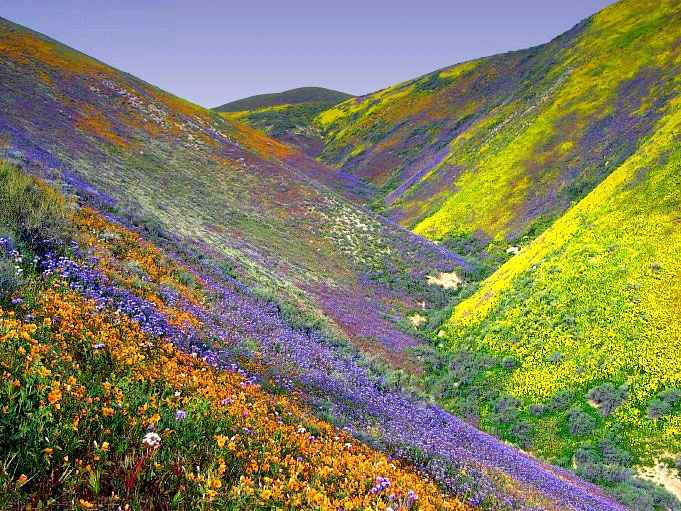 wild flowers in Tehachapi, California, May, 2005